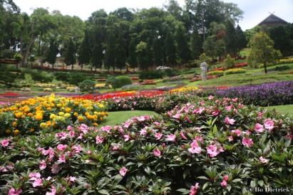 Thai Gardens