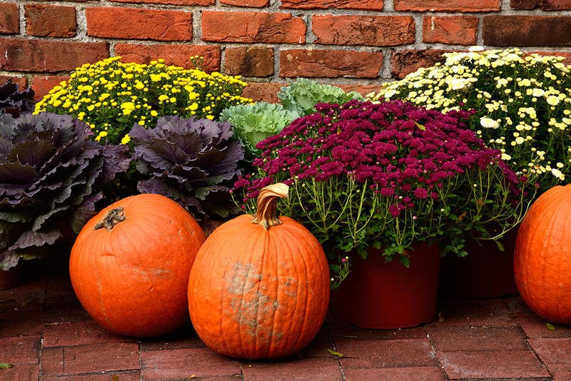 All the Best Fall Flowers for Your Home and Garden