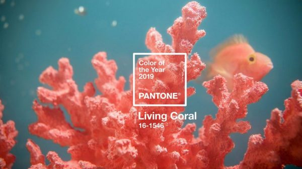 Liven up 2019 With Pantone Color of the Year Living Coral